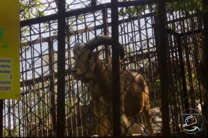 nikolaev-zoopark